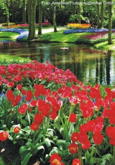 Tulpenkreuzfahrt mit der MS Amadeus Queen